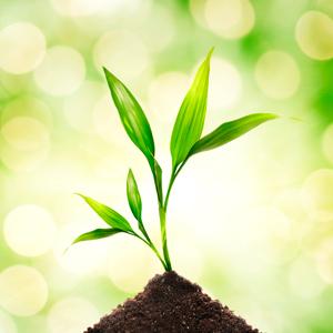 accueil-galerie-plante